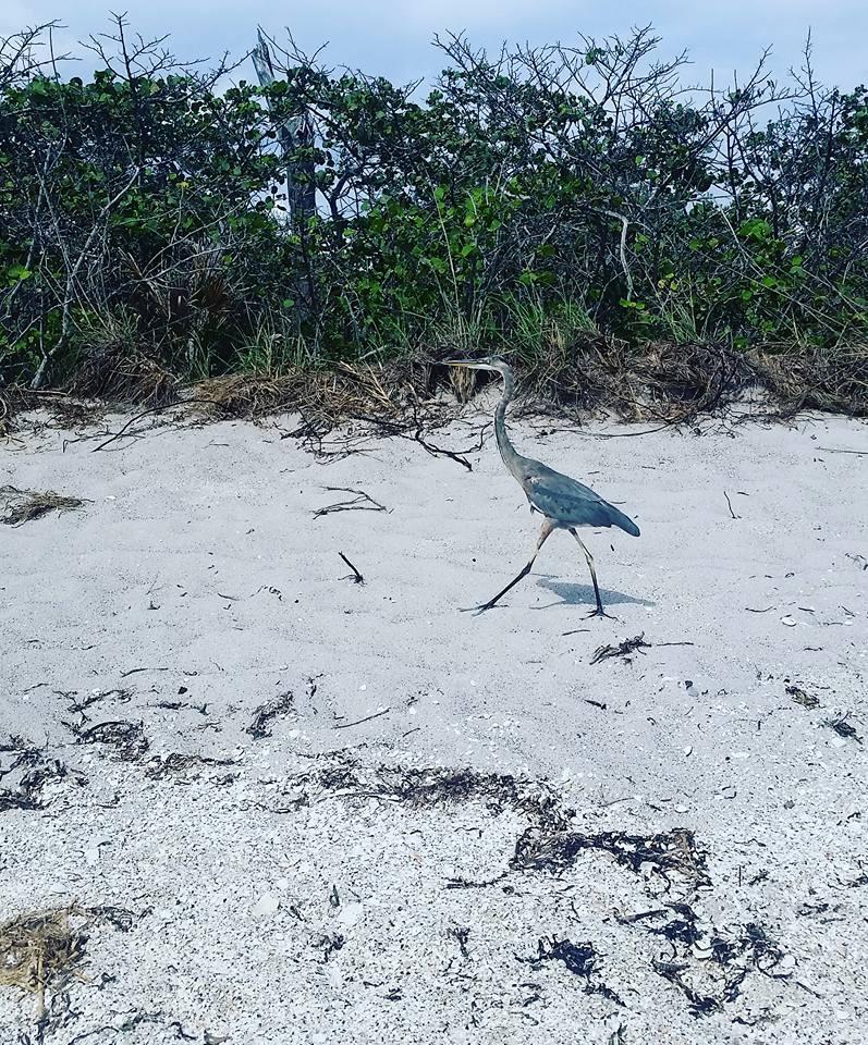 bird on shore