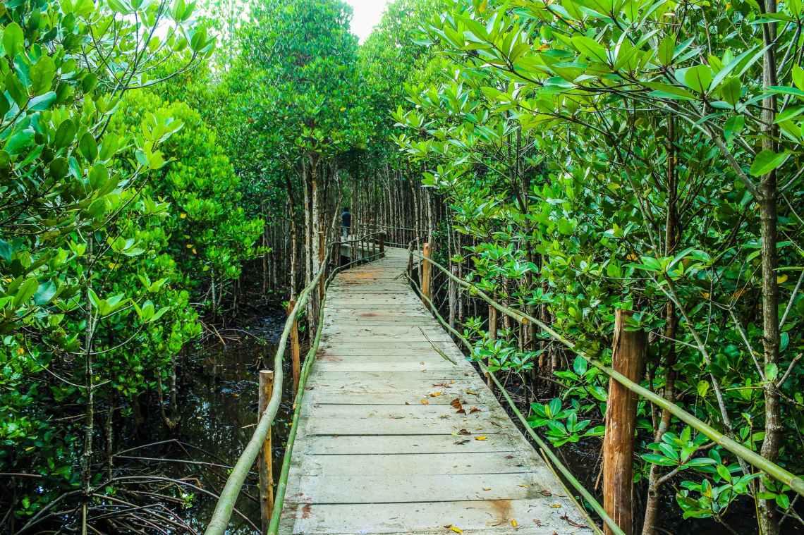 brown wooden bridge beside green leafy trees